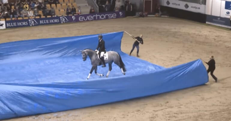 calm dressage horse