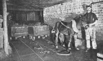 A miniature horse with his handler in a coal mine.