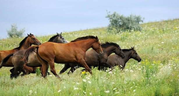 paddock paradise horses