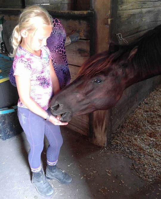 Abbycakes horse