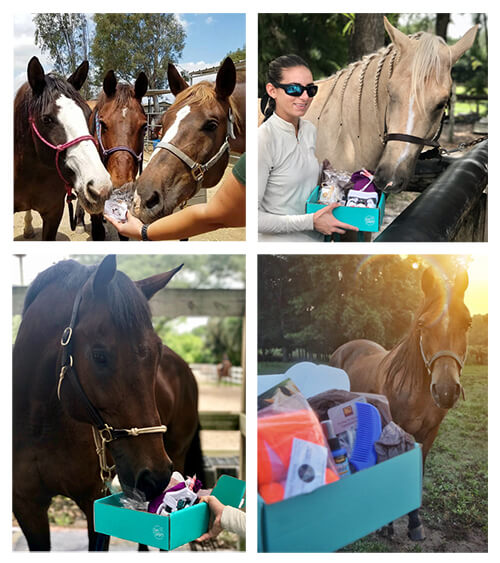 gifts for horse owners