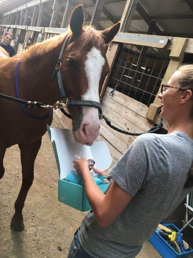 cash horse