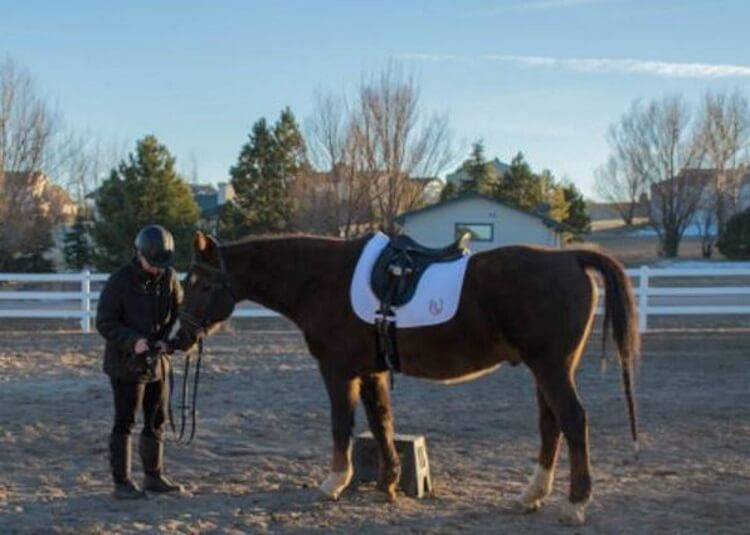 Making time for your horses