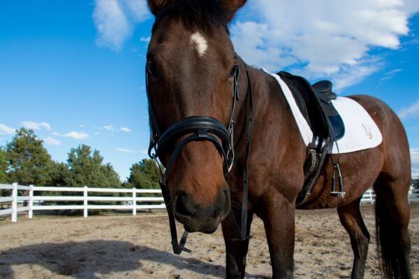 secret to success of enjoying your horse