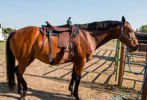 Secret of success with horses