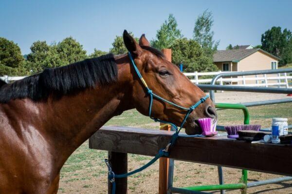 enjoying your horse more