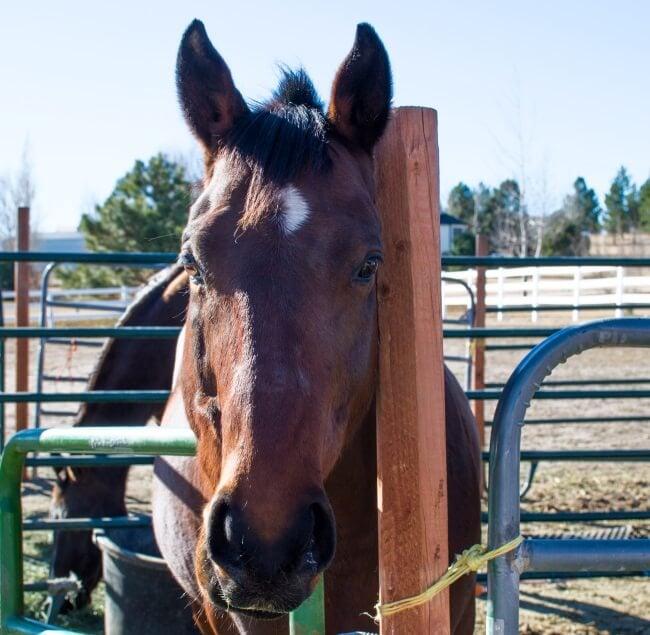 how to feed horses