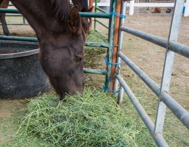 how I feed my horses