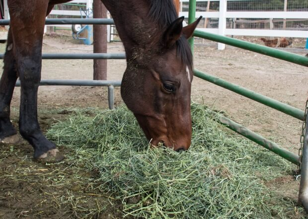 a better way to feed horses