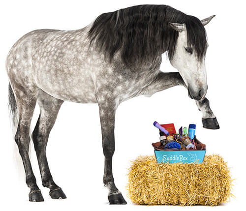 horse gifts