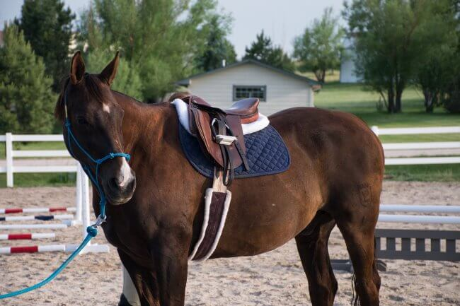 how to get better at riding horses